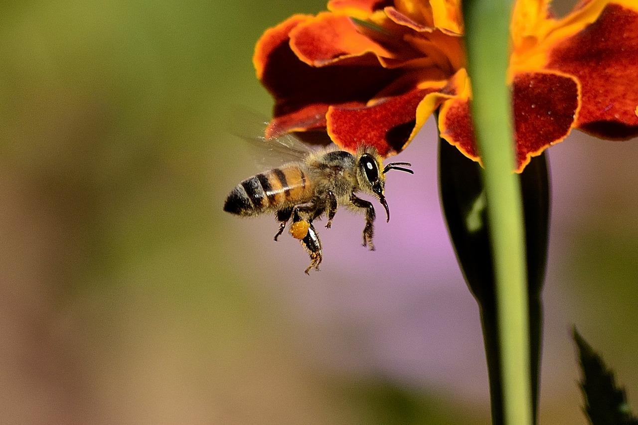 Einfach mal DANKE im Namen der Bienen und Wespen!